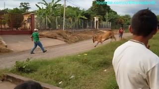 La Vaca Loca - Sosegaron a la Stefany. Vendiendo Tamales. Parte 3/4