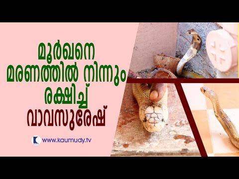 Vava Suresh Saves Cobra from Death | Snake Master | Kaumudy TV