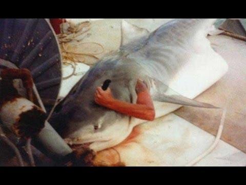 Ataque de tubarão Melhor Vídeo