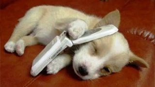 ♥Cute Dogs Doing Funny Things Compilation 2017♥