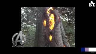 فقط في امريكا شجرة تتحرق من الداخل يا سبحان الله