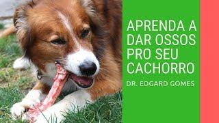 Dê ossos para o seu cachorro! | Dr. Edgard Gomes