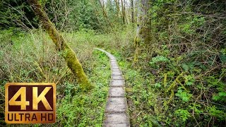 Walking in the Woods. Episode 2 - 1.5 HRS - Virtual Hike, Relaxing Sound of Nature | 4K Video