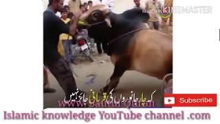 4 janwaron ki Qurbani Jaise nahi hai please subscribe your channel