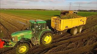 Knolselderij rooien / Celeriac harvest / Knollensellerie ernte / Drone Landbouw  / Agriculture