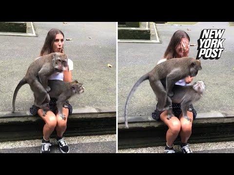 Xxx Mp4 Monkeys Make Love On Unsuspecting Woman's Lap 3gp Sex