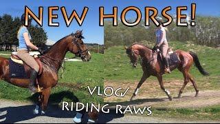 MEET MY NEW HORSE (Vlog/riding raws)