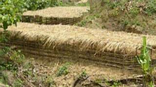 Grambangla Organic Firm