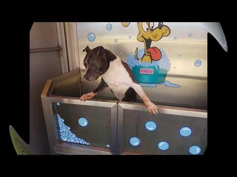 Xxx Mp4 Cloe Dog My Baby Girl 3gp Sex