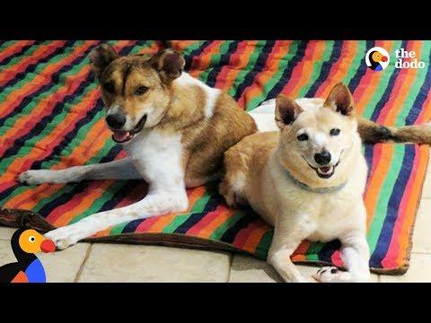 Xxx Mp4 Nervous Dog With Twisted Spine Walks Again With Dog Best Friend S Help The Dodo 3gp Sex