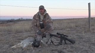 Calling In a Coyote Triple, Shooting a Double! Crazy Stand!