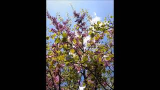 ağaç gövdesi resimleri