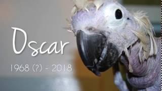 Farewell to our featherless friend, Oscar
