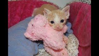 Kitten Cuddle Room -  LIVE 24/7 Foster Kitten Cam  - Coral & Nala!