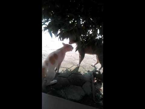 Cara kucing ciuman,gilaaa.xxx.video