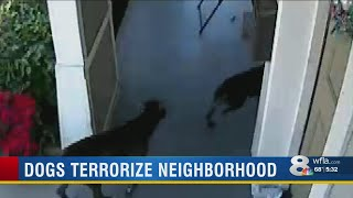 Neighbors: dangerous, vicious dogs are on the loose in Riverside Heights