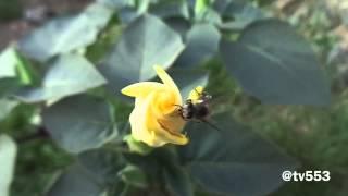 وأوحى ربك الى النحل