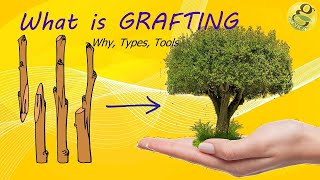 What is Grafting - Methods,Techniques,Benefits of Grafting | Grafting Tools