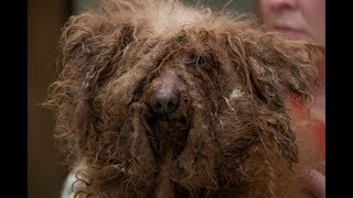 See How This Dog From A Puppy Mill Helps An Alcoholic And An Addict Be Happier