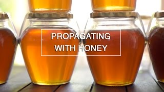 DIY - Use Honey to Root your Plant Cuttings - Green Renaissance