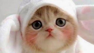 Kumpulan Video Kucing Lucu Bikin Ngakak dan Menggemaskan