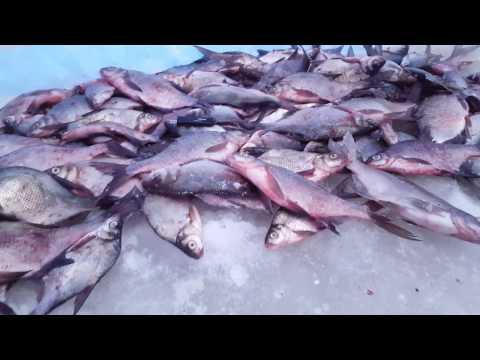 запреты рыбалки на леща
