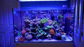 Luis Rosa's Red Sea Reefer
