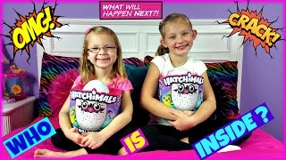 HATCHIMALS  WHO WILL I HATCH - Magic Box Toys Collector