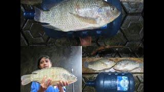 Pembenihan/Pemijahan Ikan Nila