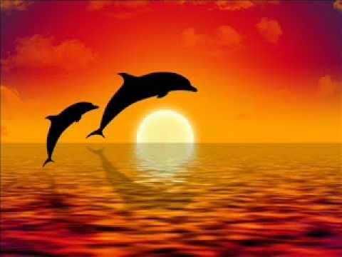 Relajación y equilibrio con Delfines Meditación guiada