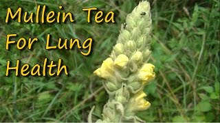 Easy To Make & Healthy Mullein Tea