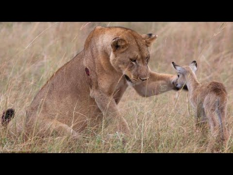 Amazing Animal Saves Another Animal Animal Heroes Lesson for humanity HD