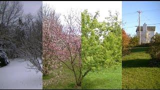Seasons Timelapse: Winter, Spring, Summer, Fall