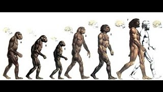 Human Evolution: The Origin of Humans - Documentary Films