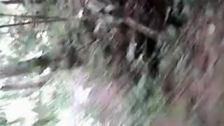 Berburu tradisional purbalingga jateng babi hutan