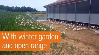 Organic broiler production: more space, more light, more welfare