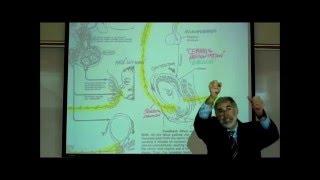 ENDOCRINOLOGY; HYPOTHALAMUS; ADH & OXYTOCIN by Professor Fink