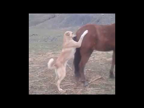 Xxx Mp4 Dog Try To Horse Sex Fight On Road Oxr 3gp Sex