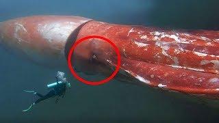 5 أشياء غريبة شاهدها الغواصون تحت سطح البحر..!!