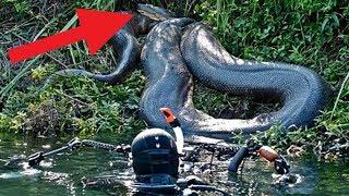 BIGGEST Snakes Found Around The World!