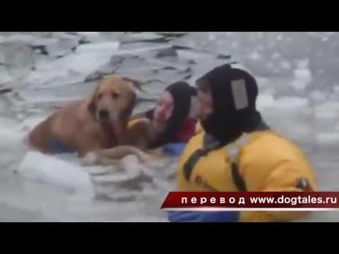 Xxx Mp4 спасение собаки из реки со льдами 3gp Sex