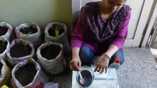 Seaweed Extract के Istemal Se Paudho Me Jadui Parivartan laye