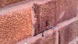 Clever bee pulls nail out of a wall