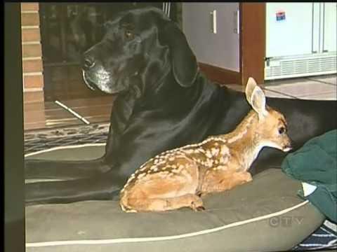 Dog and Deer Share Unusual Lovestory