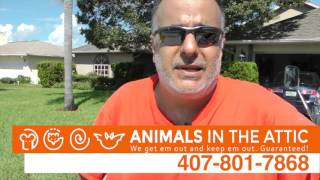 Remove & Exterminate Rats, Rodents, Orlando, FL