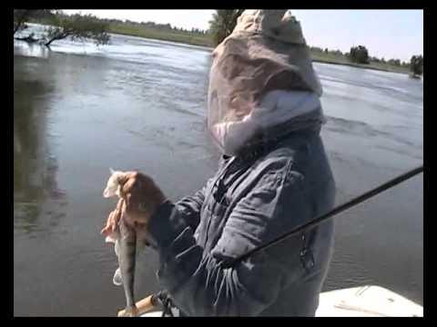 когда начинается рыбалка на ахтубе весной