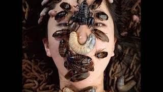 1521  Teatro Dos Gnomos   Sex with insects- Japan zoo sex- genki genki 30 12 2015