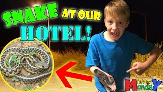 SNAKE AT OUR HOTEL! || Mommy Monday