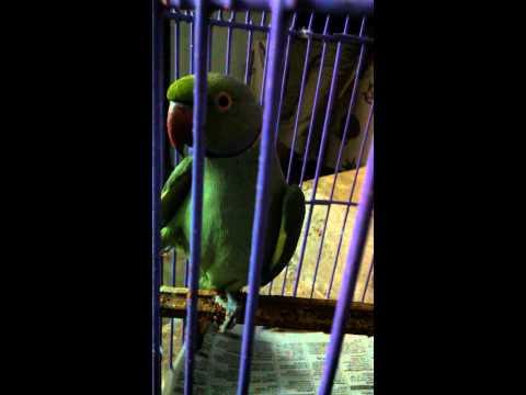 Xxx Mp4 Malayalama Speaking Parrot 3gp Sex