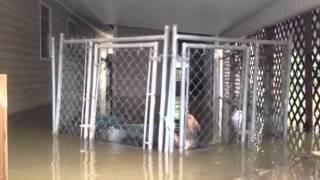 Harrowing dog rescue!  Surviving hurricane Isaac.